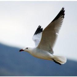 La sequía multiplicará el número de aves acuáticas migratorias en la comunidad autónoma extremeña