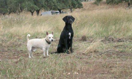 Los perros de compañía deberán identificarse y formar parte de un registro autonómico