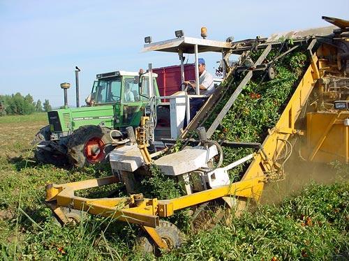 Agricultura reparte 45 millones del anticipo del Feoga entre los productores de tabaco y tomate