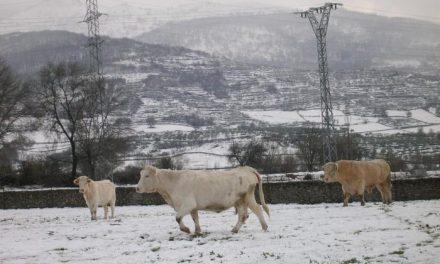 La nieve y el hielo ocasionan problemas de circulación en cinco carreteras secundarias de Sierra de Gata y Hurdes