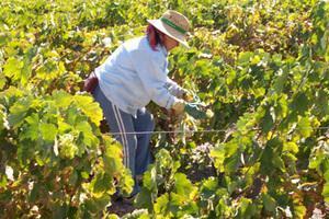 El Gobierno se compromete con organizaciones agrarias y cooperativas a poner en marcha un plan de ayuda