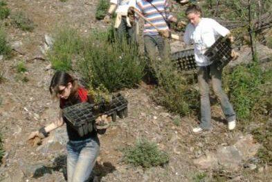 Las Hurdes recibe este fin de semana a 100 voluntarios del programa de reforestación «Plantabosques»