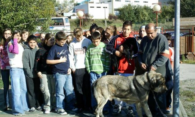 La asociación Lobo Cerval organiza una actividad sobre la trashumancia con los alumnos de Caminomorisco