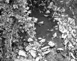 El Partido Popular culpa a la depuradora de aguas residuales del mal estado de la rivera de Zafra