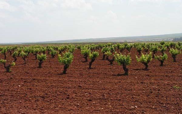 """El sector vitivinícola ha solicitado al MARM que se autorice una """"destilación de crisis"""" en el sector"""