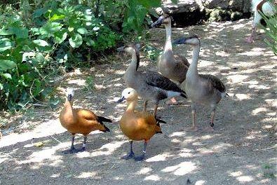 El Ayuntamiento de Plasencia solicita a la Junta el cierre parcial del Parque Ornitológico de los Pinos