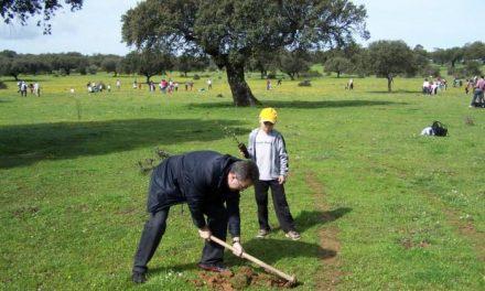 La dehesa boyal de Montehermoso acogió una jornada de reforestación con encinas y alcornoques
