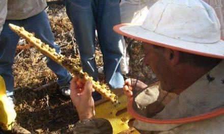 Los apicultores hurdanos consideran vital la cría de la abeja reina para la continuidad de las colmenas