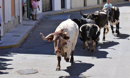El Ayuntamiento de Moraleja concova el concurso del cartel de San Buenaventura con un premio de 600 euros