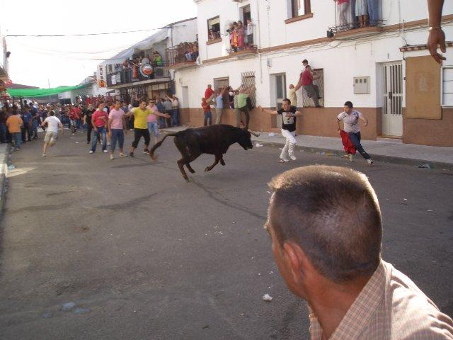 Dos jóvenes resultan heridos leves durante la suelta de vaquillas por las calles de Moraleja el 1 de mayo