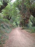 La comarca cacereña de La Vera desarrolla una campaña divulgativa que conciencia sobre el medio ambiente