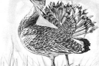 Adicomt propone exposiciones on line en el congreso iberoamericano de turismo ornitológico