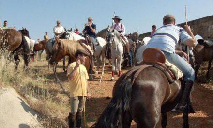Los caballistas conducen a los bueyes de San Juan desde la finca hasta los corrales de la ciudad de Coria