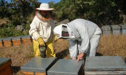 Apihurdes alerta de un descenso de la producción en polen y miel esta temporada debido al estres hídrico