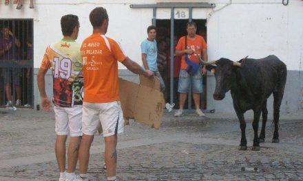 «El Gallo Felisuco» con la colaboración de Mesón El Puja soltarán mañana una vaca después de la novillada