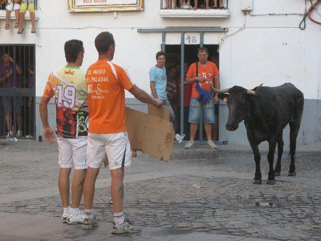 """""""El Gallo Felisuco"""" con la colaboración de Mesón El Puja soltarán mañana una vaca después de la novillada"""
