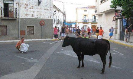 Los primeros festejos taurinos de Moraleja concluyen sin incidentes ni heridos por asta de toro