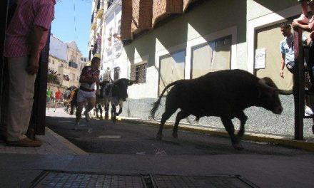 El encierro de los novillos de Cebada Gago se demora en la plaza de los toros hasta pasados los tres minutos