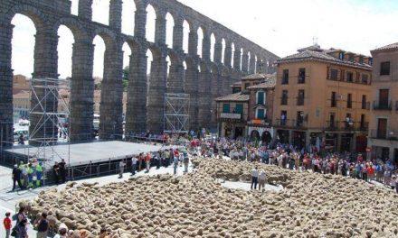Una fiesta pastoril burgalesa pondrá fin a la trashumancia de las dos mil ovejas de queso de La Serena