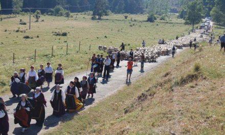 LLegan a la Sierra de la Demanda las más de 2.000 ovejas trashumantes de la DOP Queso de la Serena