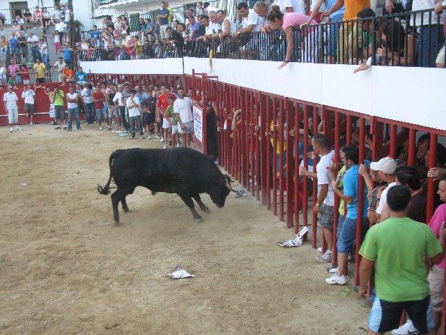 El primer novillo que se suelta por las calles, de la peña San Sacabó, congregó a decenas de personas