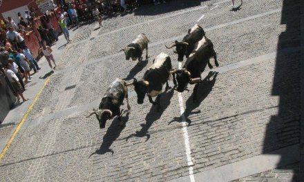 """Los """"patablanca"""" de Monteviejo cierran los encierros con un tiempo de 3 minutos y 55 segundos"""