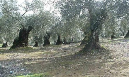 La planta para tratar los residuos de las almazaras en Sierra de Gata costará 700.000 euros