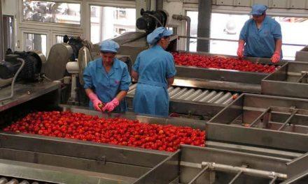 """UPA-UCE Extremadura aventura una campaña de recogida de tomate inferior al """"excepcional"""" año 2009"""