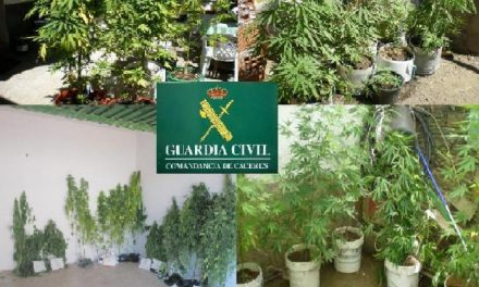 La Guardia Civil detiene a siete personas en Monroy por cultivar plantas de Cannabis Sátiva