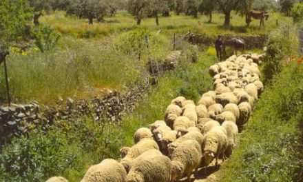 La Fundación Biodiversidad pone en marcha iniciativas dirigidas a pastores y ganaderos del sector ovino