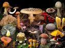 El Ayuntamiento de Portezuelo organiza el VIII Encuentro Micológico para el 18 de noviembre