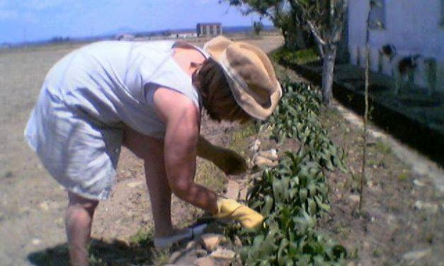 Extremadura se sitúa como la segunda región con más agricultura ecológica