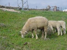 La organizazión agraria Asaja pide que se denuncie la no recogida de animales muertos en explotaciones