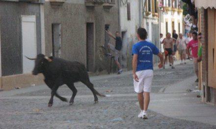 Los jóvenes de Zarza acusados de un presunto maltrato a una vaca aseguran que no se lastimó a la res