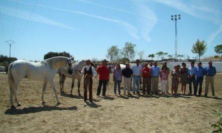La organización destaca el rotundo éxito de participación en la Feria del Caballo de Torrejoncillo