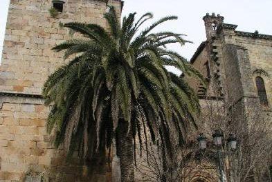 La Guardia Civil sigue la pista de dos cacos que el viernes atracaron Caja Extremadura en Torre de Don Miguel