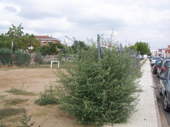 """El PP de Moraleja denuncia el """"abandono"""" en el que se encuentran los parques y jardines de la localidad"""