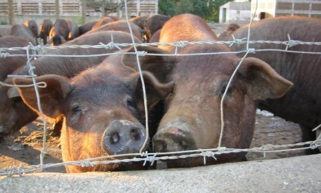 """UPA-Uce resalta la situación """"de incertidumbre"""" que se vive en la ganadería por """"la falta de confianza"""""""