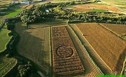 Ecologistas en Acción defiende un acto de sabotaje ejecutado en un campo de maíz transgénico en Guareña