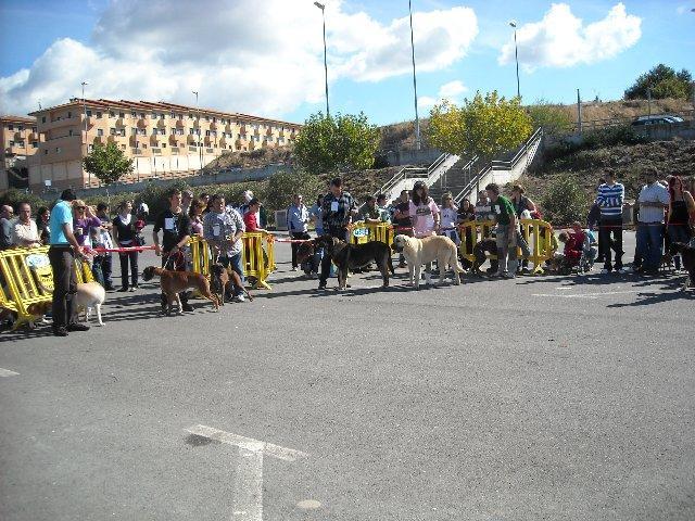 El III Concurso Canino de belleza Manatí Mascotas congrega a 80 participantes en Plasencia