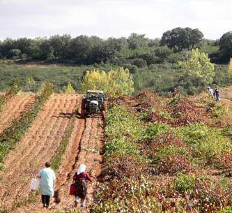 Fademur Extremadura reivindica el papel de la mujer rural en las explotaciones