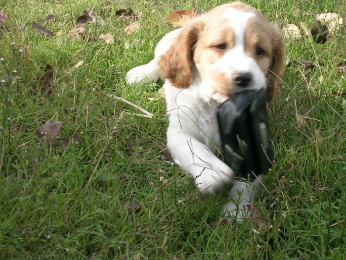 El Ayuntamiento de Moraleja regula la odenanza que regula la tenencia de perros en el municipio
