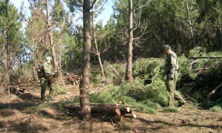 Trabajadores forestales de Las Hurdes exigen jornales en los montes y llegan a un acuerdo con Agroforex
