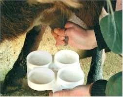 UPA-Uce exige a las industrias que suban los precios de la leche de cabra ante las pérdidas del sector