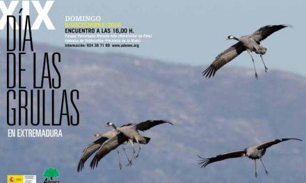 Adenex celebrará este domingo 5 de diciembre la XIX edición del Día de las Grullas en Extremadura