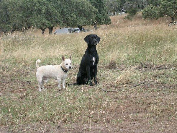 Las Protectoras de Animales informarán el fin de semana de la entrada en vigor del decreto del microchip
