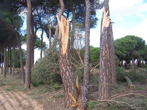 UPA-Uce pide a la administración que evalúe los daños de los tornados y se estudien posibles medidas