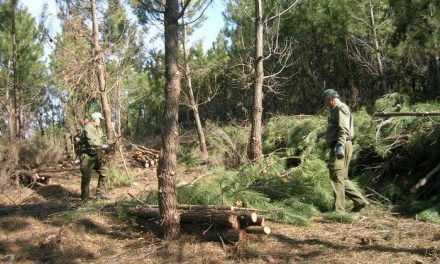 Las empresas forestales reclaman una inversión mínima de 15 millones para los montes hurdanos