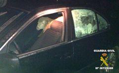 Un joven es detenido cuando transportaba en su coche cinco borregos sustraídos en Navalvillar de Pela