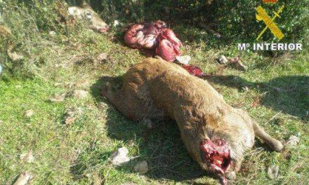 La Guardia Civil realiza una nueva intervención contra la caza furtiva en la comarca cacereña de las Villuercas